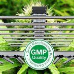 Cannabis medicinal fotoperiodo