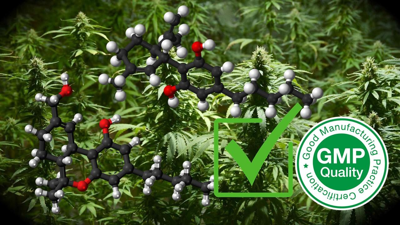 Obtención licencia cultivo de cannabis